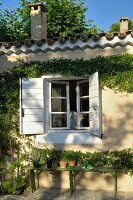Sunlit, climber-covered house facade and green wooden bench under open window with white shutters