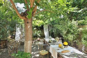 Long dining table below shady trees in Mediterranean garden