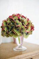 Hydrangea flower in a glass on a mantelpiece