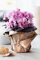 Potted plant wrapped in newspaper cover