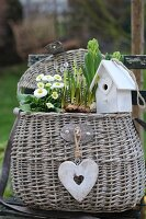 Spring basket with English daisies, hyacinth and bird house on a garden chair