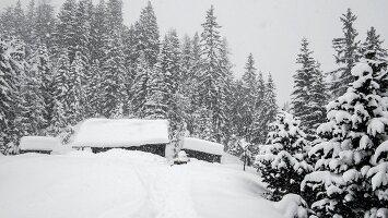 Verschneite Almhütte von Bäumen umgeben