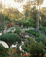 Desert style garden in Los Angeles, California