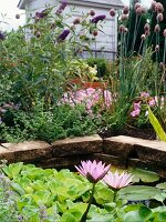 Water lillies in water garden