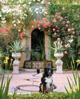 Dog in flowering garden
