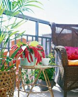 Plants and furniture on a balcony