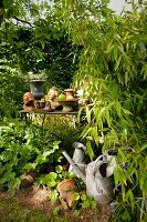Zinc watering cans and plant pots on table in hidden spot in garden