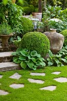 Stone flags in lawn in front of steps and various plants amongst box balls