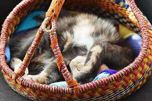 A grey tortoiseshell cat asleep in a striped straw African basket