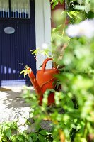Orange watering can next to climbing plant