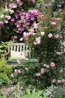 Secluded seating area amongst pink roses