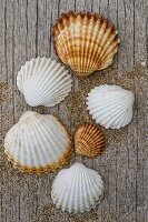 Seashells and sand on rustic wooden board