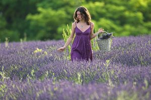 Junge Frau im Lavendelfeld (Vignale Monferrato, Piemont, Italien)