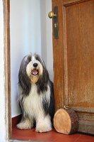 Doorstop made from heavy slice of tree trunk with brass ring handle; dog in open door