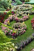 Planting scheme of begonias in park