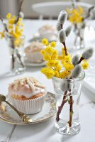 Willow catkins and mimosa flowers in glasses and muffin on Easter table