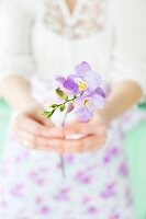 Woman holding delicate stem of purple freesias