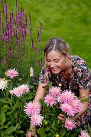 Woman cutting flowers in garden (pink dahlias)