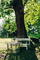 Rustic table and bench under tree in summer atmosphere
