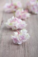 Hydrangea florets on wooden board