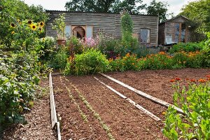 Freshly sown vegetable patch and flowers in garden in front of simple wooden house