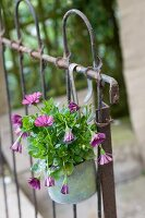 Purple flowers in zinc pot hanging on old metal grille fence