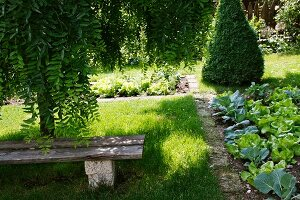 Garden with bench on lawn and narrow stone path alongside bed of lettuce and Kohlrabi