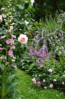 Shades of pink and purple in profusely flowering herbaceous borders