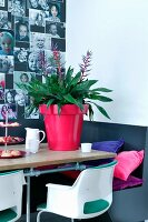 Bromeliad in red flower pot on table in front of gallery on photographs on wall
