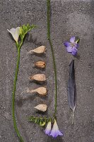 Bulbs between white and purple freesias on stone surface