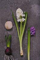 White and purple hyacinths on stone slab
