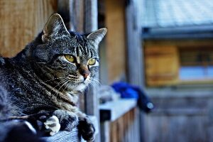 Cat on balcony of farmhouse