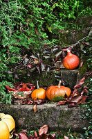 Pumpkins on wooden steps in autumnal garden
