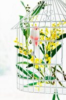 Branch of mimosa in white metal birdcage