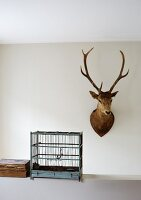 Hunting trophy on wall next to vintage, wooden bird cage on half-height wall