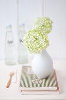 Viburnum flowers in small white vase