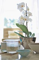 White orchid in glossy silver pot