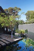 Holzterrasse mit eingepflanztem Baum, in Teich integriert, im Garten mit hoher Mauer