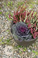 Pot planted with ornamental cabbage and heather on gravel floor