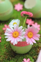 Daisies and ox-eye daisies in green-dyed egg shell decorated with polka-dot ribbon on moss