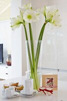 White amaryllis in glass vase on coffee table