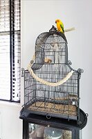 Parrot sitting on top of black vintage birdcage on side table
