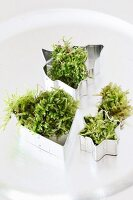 Pastry cutters filled with fresh moss on silver plate