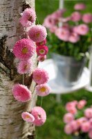 Garland of pink daisies hanging on birch trunk