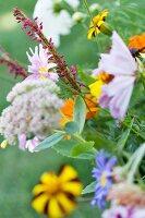 Colourful, summer garden flowers against green background