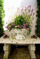 Pink-flowering plant in antique white urn on vintage stone bench