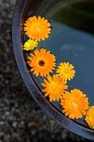 Pot marigold flowers floating in water