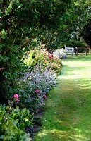 Flowering plants including lamb's ear (stachys) in flowerbed next to neat lawn in summer garden