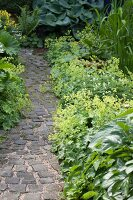 Curved cobbled path leading between foliage plants in garden