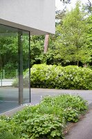 Corner of modern glass façade and planted beds on terrace in front of mature trees